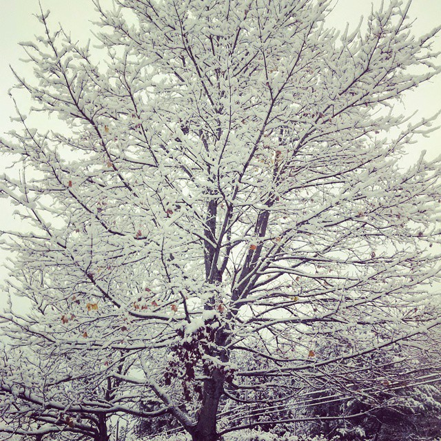 First snow! #snow #maine #fall #winteriscoming #november #firstsnow #snowflake #pretty